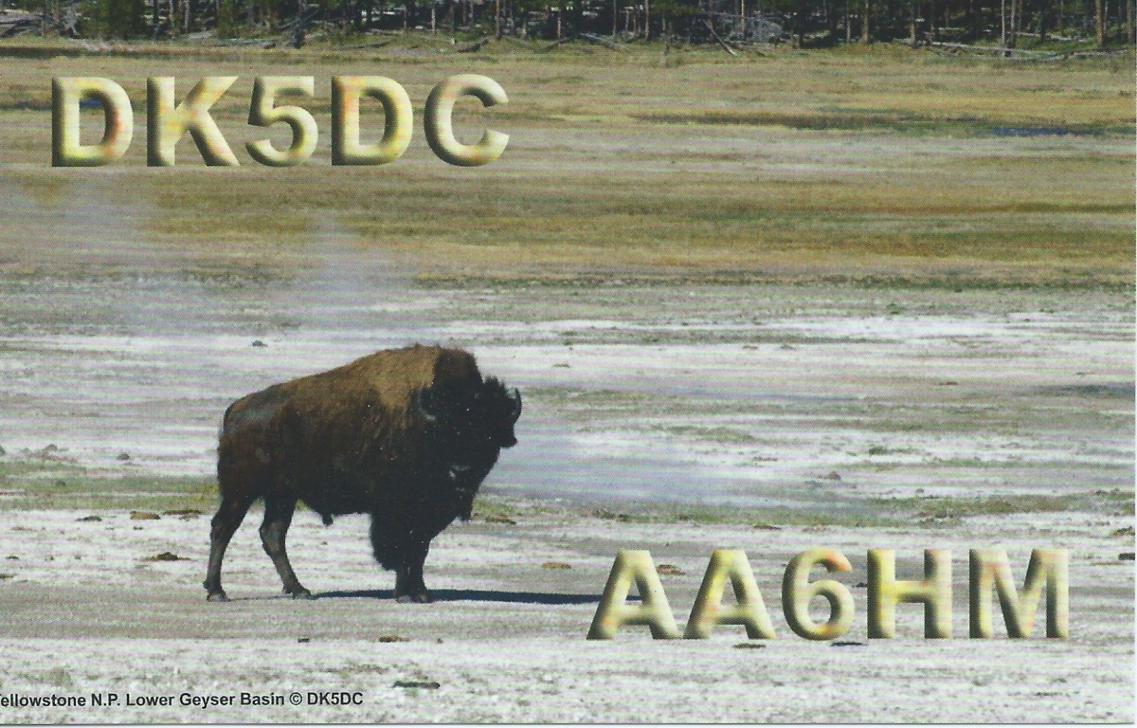 My actual qsl