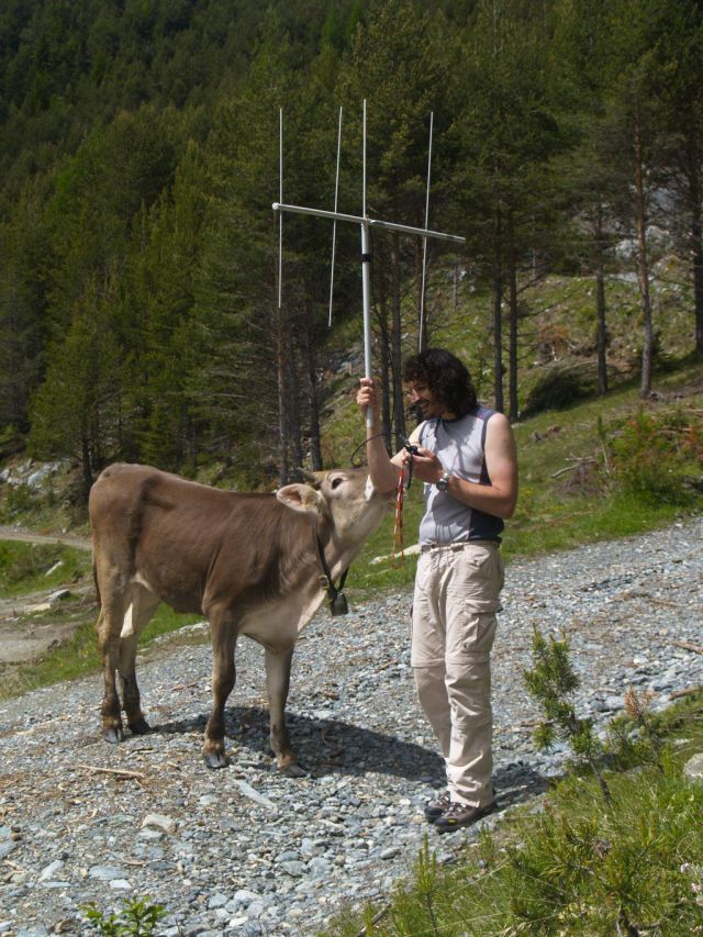Radio operations with a cow