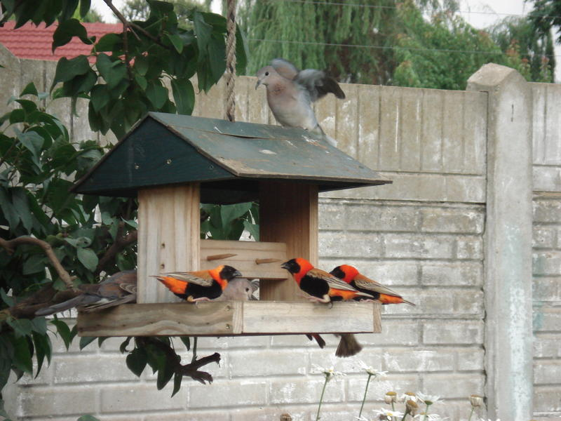 Birds in my garden