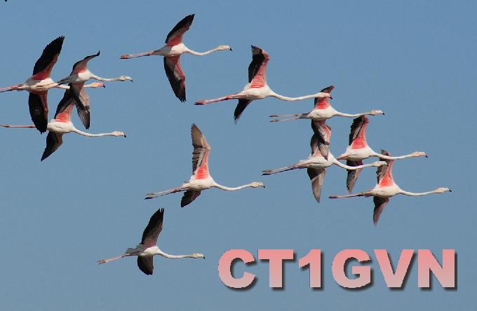 QSL image for CT1GVN