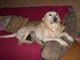 Toby our 15 year old Labrador and Susie one of our ten cats.